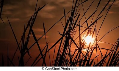reeds silhouette