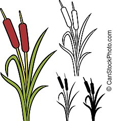 reeds (vector illustration of bulrush, bullrushes and grass)