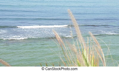 Reeds with sea waves in the background