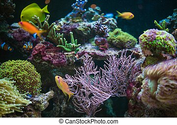 Tropical Fishes Hobby - Reef and Tropical Fishes Hobby. ...