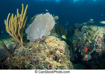 Reef Composition with large Sea Fan on a coral ledge.