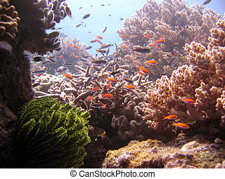 Reef Environment - Soft coral haven