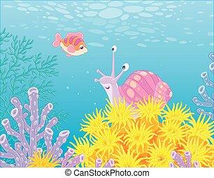 reef- fische, koralle, schnecke, meer, tropische