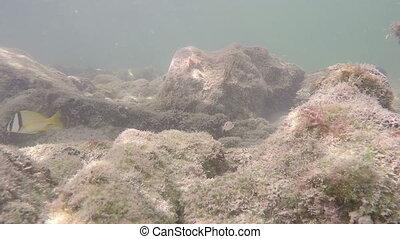 Reef fish Florida Keys - Underwater reef fish Florida Keys