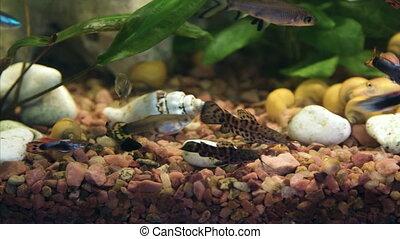 Reef fish swim peacefully