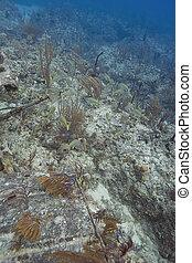 mulitple species of fish living in a reef