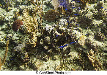 multiple species of small fish in a reef