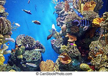 Reef - Aquarium with submarine life
