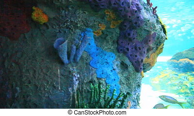 Reefs with large numbers of fish - Colorful tropical coral...