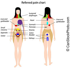 Diagram showing how pain from internal organs is felt in specific areas of the skin
