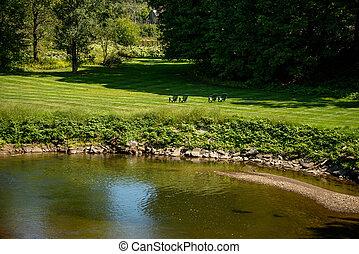 reflété, peu, coloré, rivière, landcape, stowe, vermont