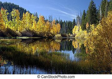 Reflected Autumn Aspen Trees