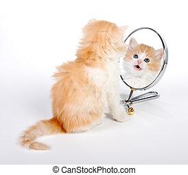 Reflected kitten - Six weeks old kitten looking in a mirror