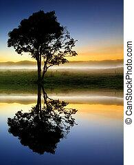 reflectie, en, silhouette, van, een, boompje