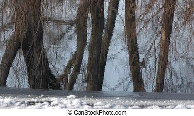 reflectie, van, bomen, zonder, bladeren, in, water