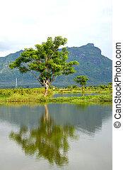 village panaroma on South Sulawesi - reflection a big tree ...