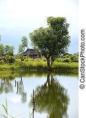 reflection a big tree on a pool a village panaroma on South Sulawesi