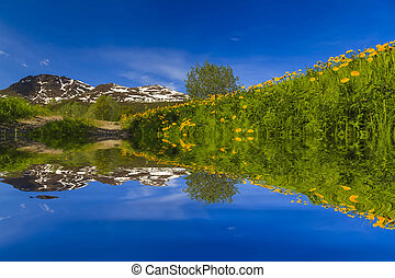 Reflection amazing spring landscape in the water.