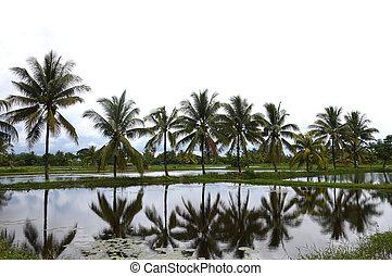 village panaroma on South Sulawesi - reflection coconut ...