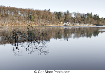 Reflection in a Lake
