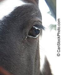 Reflection in horse eye