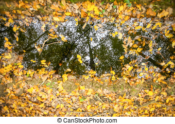 Reflection in puddle - A reflection of trees in a puddle in...