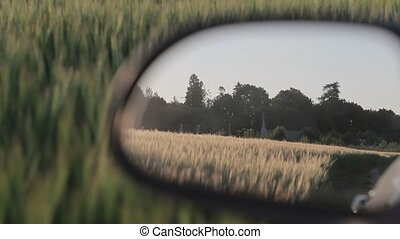 Reflection in the rear-view mirror Field of barley In slow motion