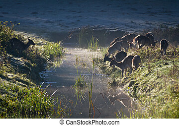 Reflection of antlers herd standing near the river on the frozen meadow at sunrise