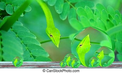 Reflection of Close up to Oriental whipsnake hide in the leaves in the garden for insects and small animals to eat
