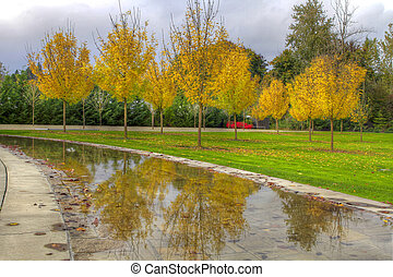 Reflection of Fall Season at the Park
