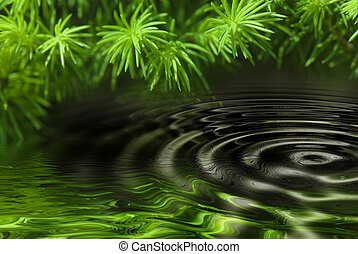 Reflection of forest in water - green leaves reflecting in...