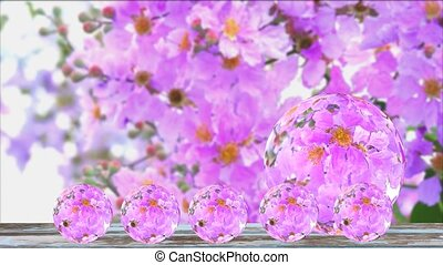 Reflection of Lagerstroemia speciosa pink white flower bloom in the garden in autumn ball glass on old wood floor