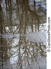reflection of tree branches in a puddle on the sidewalk