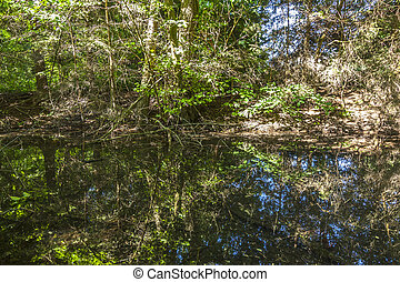 reflection of trees in a lake