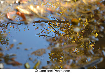 Reflection of trees in a puddle - Reflection of trees in a...
