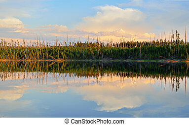 Reflection of trees in the lake at Ice Lake Campground in Yellowstone National Park in Summer