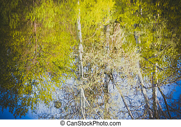 reflection of trees in water, spring