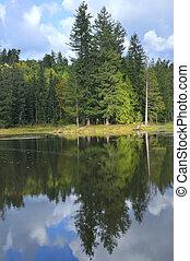 reflection of trees on calm lake with sun peeking through...