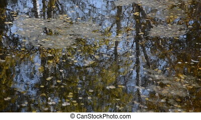Reflection of trees on the lake in