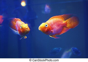 Reflection of two tropical fish