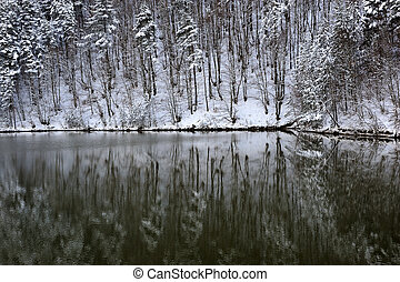 Reflection of winter forest