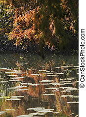 reflection on pond in autumn
