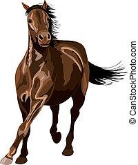 reflections., glänzend, sonnenschein., pferd, galoppieren, ...