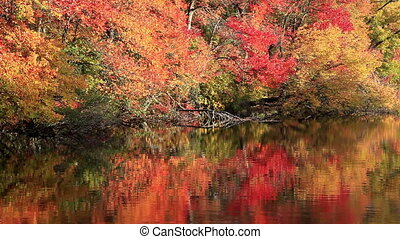 Reflections in a Lake of Trees and Leaves