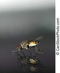 reflections of an insect in macro