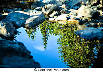 reflections of forest trees in clear puddle