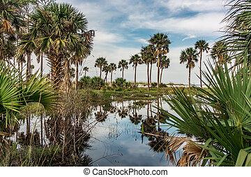 reflections of palm trees on hunting island south carolina