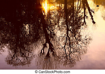 reflections of the trees on water