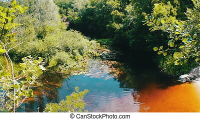 Reflections of trees and foliage on the watery surface of the river