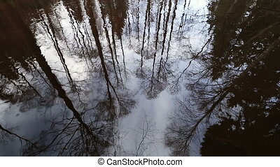 Reflections of trees branches on the water surface of the river.